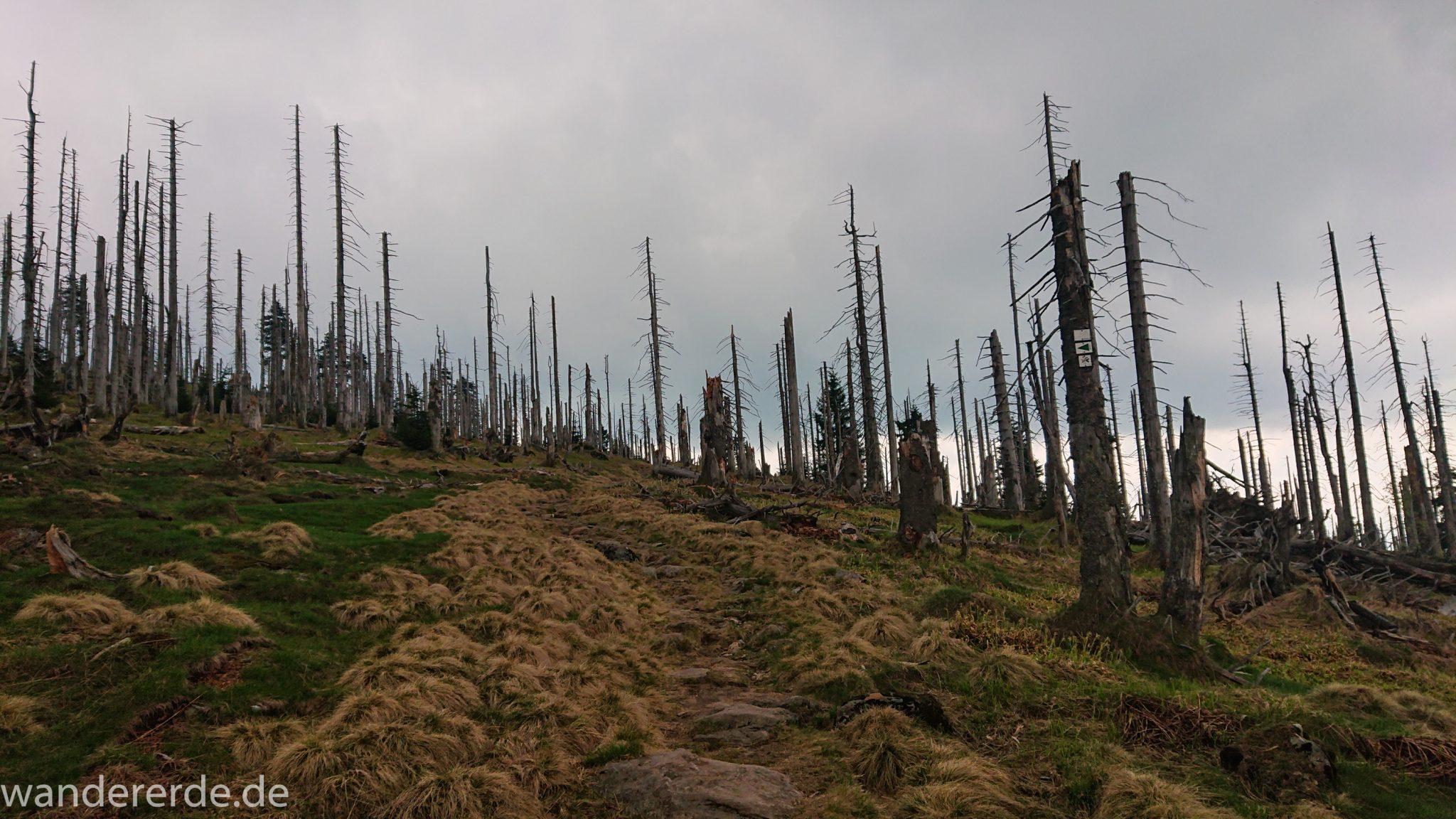 Wanderung Großer Rachel im Nationalpark Bayerischer Wald, Start Parkplatz Oberfrauenau, abwechslungsreicher Wanderweg, auf schmalem Pfad über Stock und Stein, Zerstörung einiger Waldgebiete durch den Borkenkäfer, umgefallene Bäume werden liegen gelassen im Nationalpark, Natur wird sich selbst überlassen, Wegmarkierung auf den Berg Großer Rachel mit grünem Dreieck
