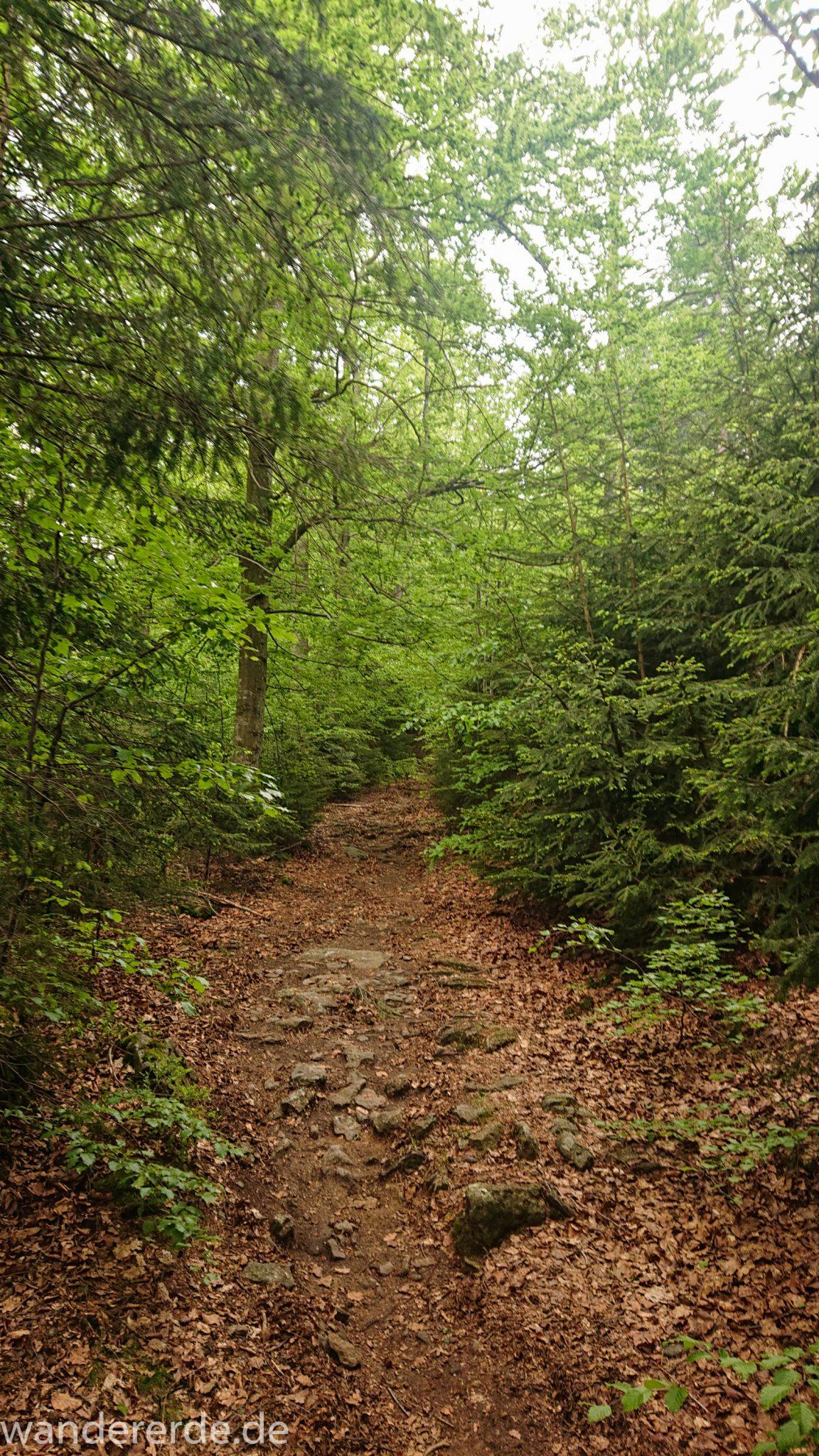 Wanderung Großer Rachel im Nationalpark Bayerischer Wald, Start Parkplatz Oberfrauenau, toller naturbelassener Wanderweg mit kühlendem Schatten, schöner dichter Wald
