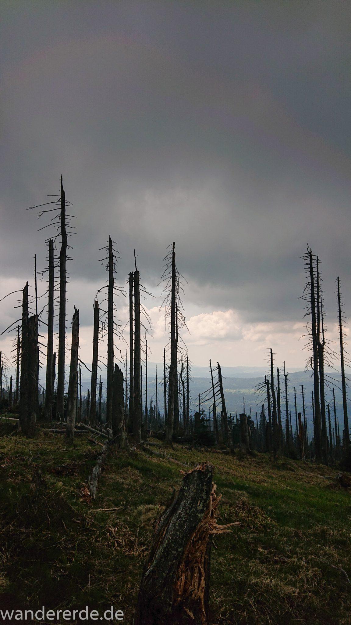 Wanderung Großer Rachel im Nationalpark Bayerischer Wald, Start Parkplatz Oberfrauenau, abwechslungsreicher Wanderweg, Zerstörung einiger Waldgebiete durch den Borkenkäfer, umgefallene Bäume werden liegen gelassen im Nationalpark, Natur wird sich selbst überlassen