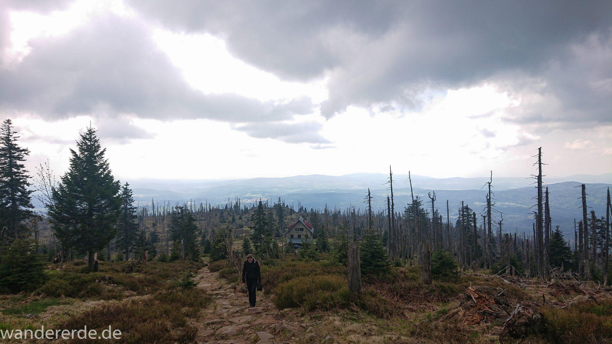 Wanderung Großer Rachel im Nationalpark Bayerischer Wald, Start Parkplatz Oberfrauenau, abwechslungsreicher Wanderweg, auf schmalem Pfad über Stock und Stein, Zerstörung einiger Waldgebiete durch den Borkenkäfer, umgefallene Bäume werden liegen gelassen im Nationalpark, Natur wird sich selbst überlassen, letzter Abschnitt auf den Großen Rachel vom Waldschmidthaus sehr steil über große Steine, weite Aussicht auf Waldgebiet Bayerischer Wald