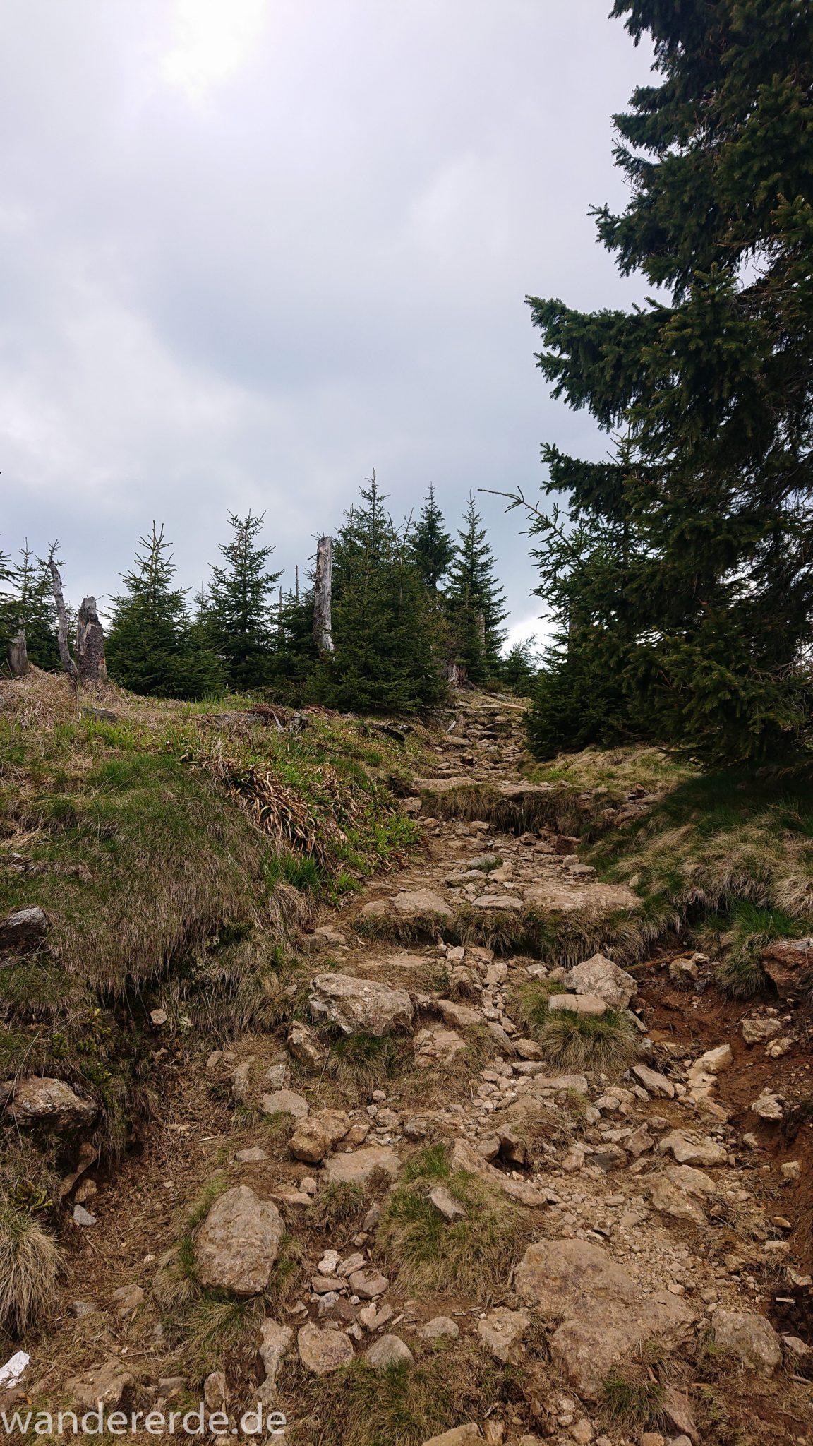 Wanderung Großer Rachel im Nationalpark Bayerischer Wald, Start Parkplatz Oberfrauenau, abwechslungsreicher Wanderweg, auf schmalem Pfad über Stock und Stein, letzter Abschnitt auf den Großen Rachel vom Waldschmidthaus sehr steil über große Steine