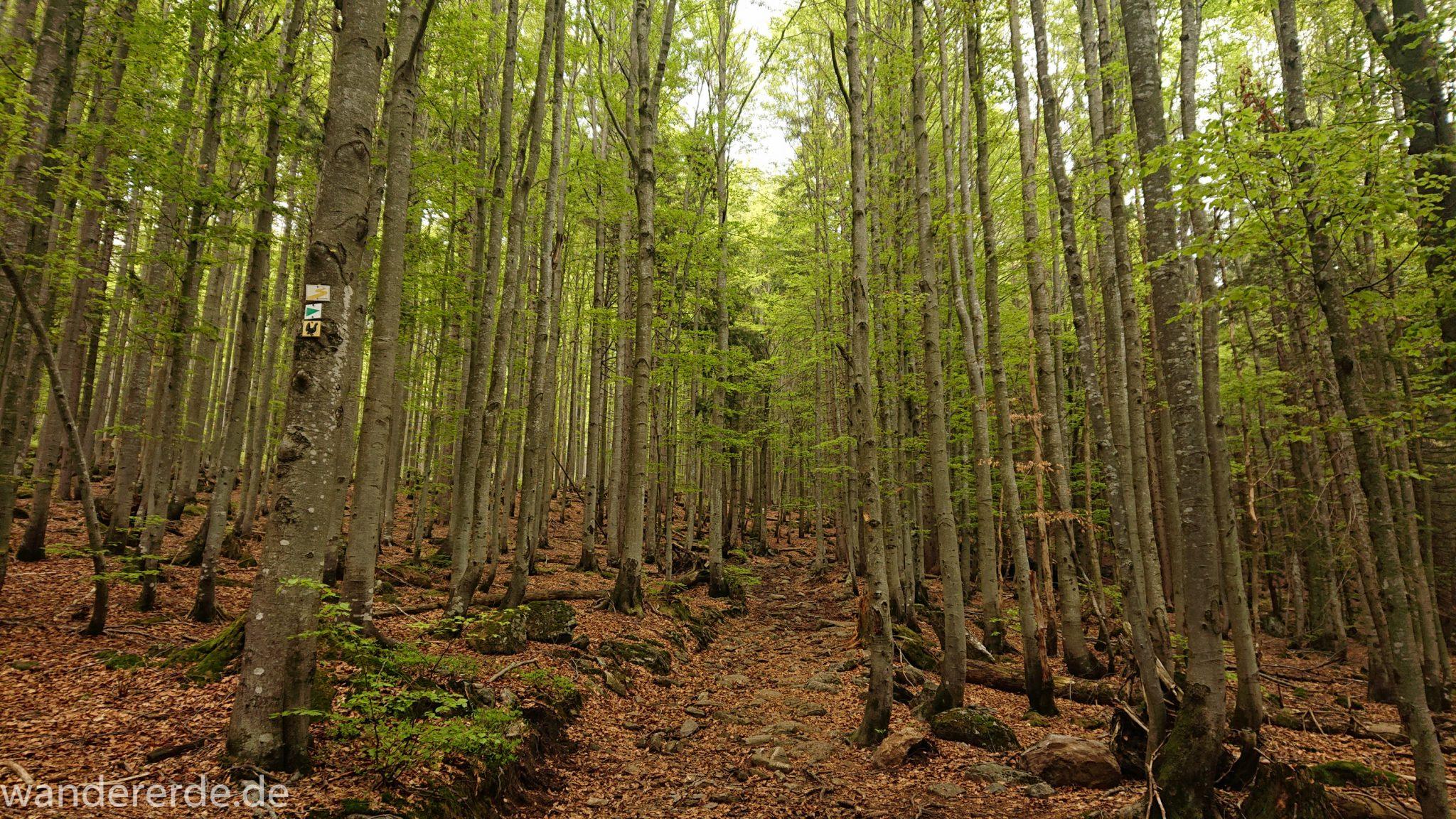 Wanderung Großer Rachel im Nationalpark Bayerischer Wald, Start Parkplatz Oberfrauenau, abwechslungsreicher Wanderweg, auf tollem Pfad über Stock und Stein, schöner dichter Wald, Laubbaum, Nadelbaum, Wegmarkierung an Baum