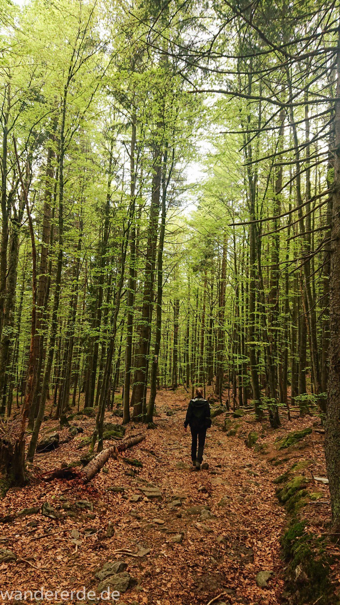 Wanderung Großer Rachel im Nationalpark Bayerischer Wald, Start Parkplatz Oberfrauenau, Wanderer auf abwechslungsreichem Wanderweg, auf tollem Pfad über Stock und Stein, schöner dichter Wald, Laubbaum, Nadelbaum