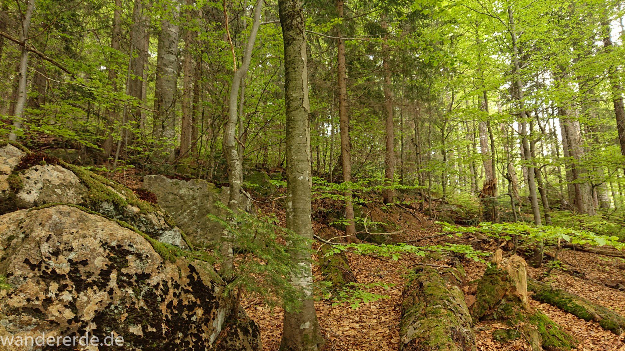 Wanderung Großer Rachel im Nationalpark Bayerischer Wald, Start Parkplatz Oberfrauenau, abwechslungsreicher Wanderweg, auf tollem, schmalem Pfad über Stock und Stein, schöner dichter Wald, Laubbaum, Nadelbaum