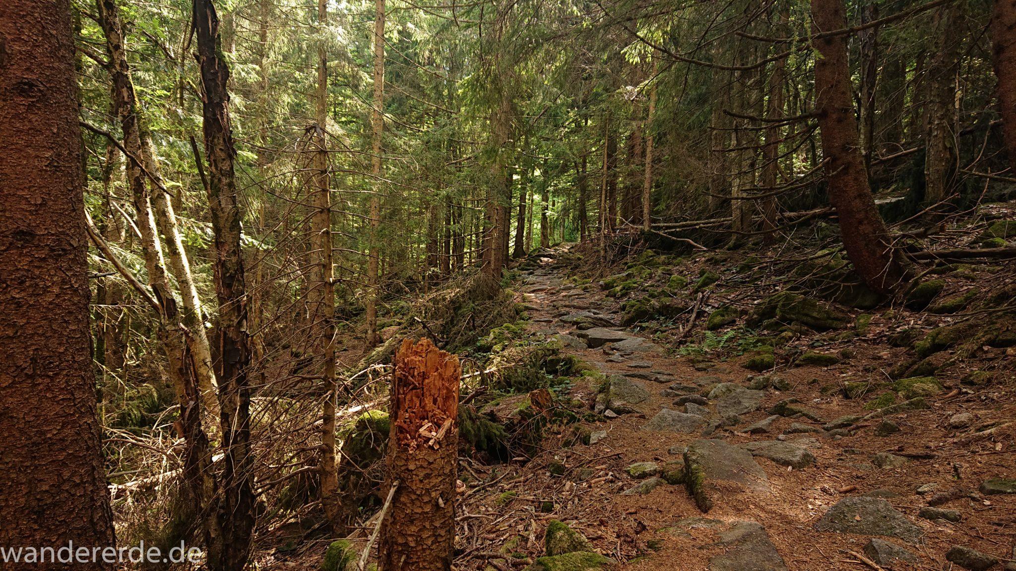 Wanderung Großer Rachel im Nationalpark Bayerischer Wald, Start Parkplatz Oberfrauenau, sehr abwechslungsreicher Wanderweg auf den Berg großer Rachel über Stock und Stein, kühlender Schatten an warmem Frühlingstag