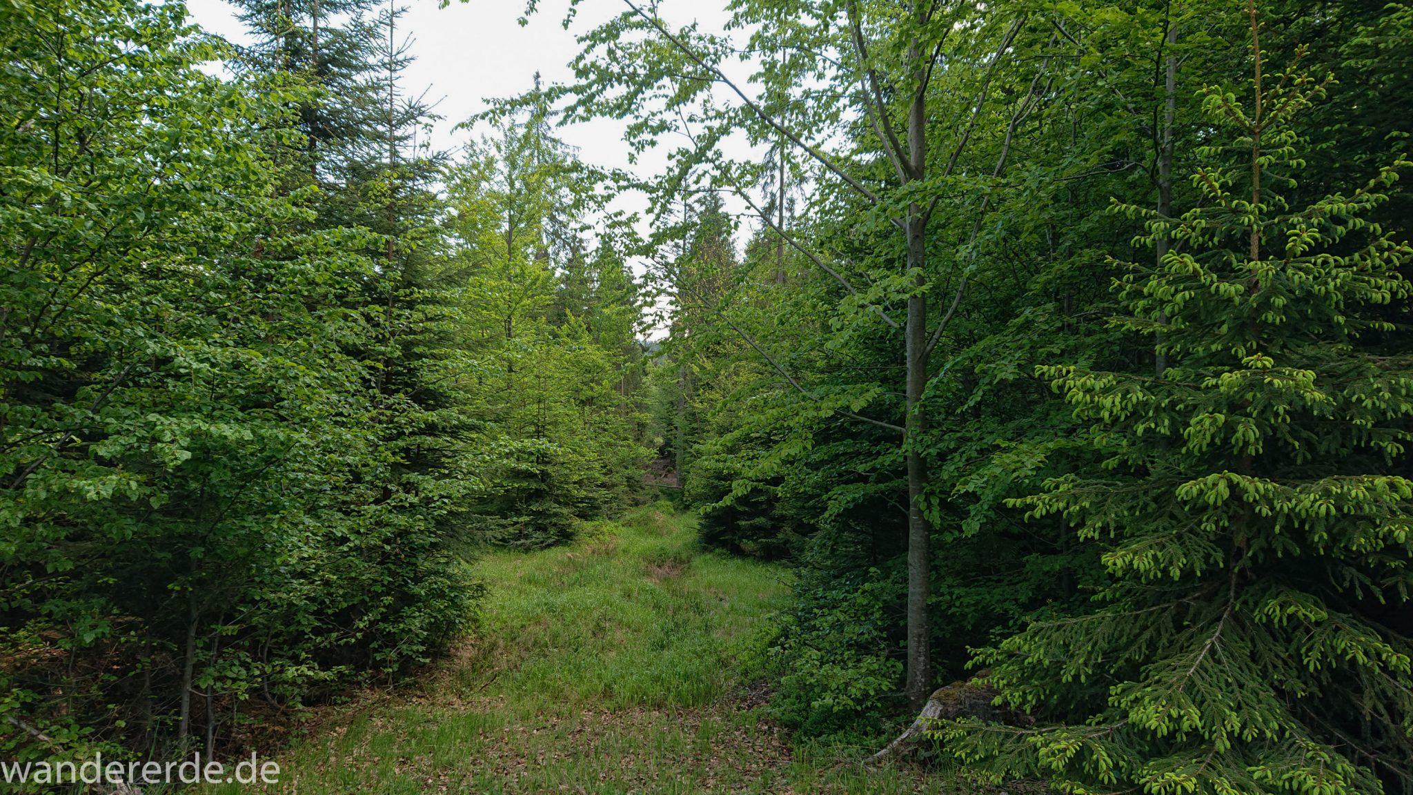 Wanderung Großer Rachel im Nationalpark Bayerischer Wald, Start Parkplatz Oberfrauenau, abwechslungsreicher Wanderweg, schöner dichter Wald in verschiedensten Grüntönen, Mischwald aus Laub- und Nadelbäumen, kühlender Schatten an warmem Frühlingstag