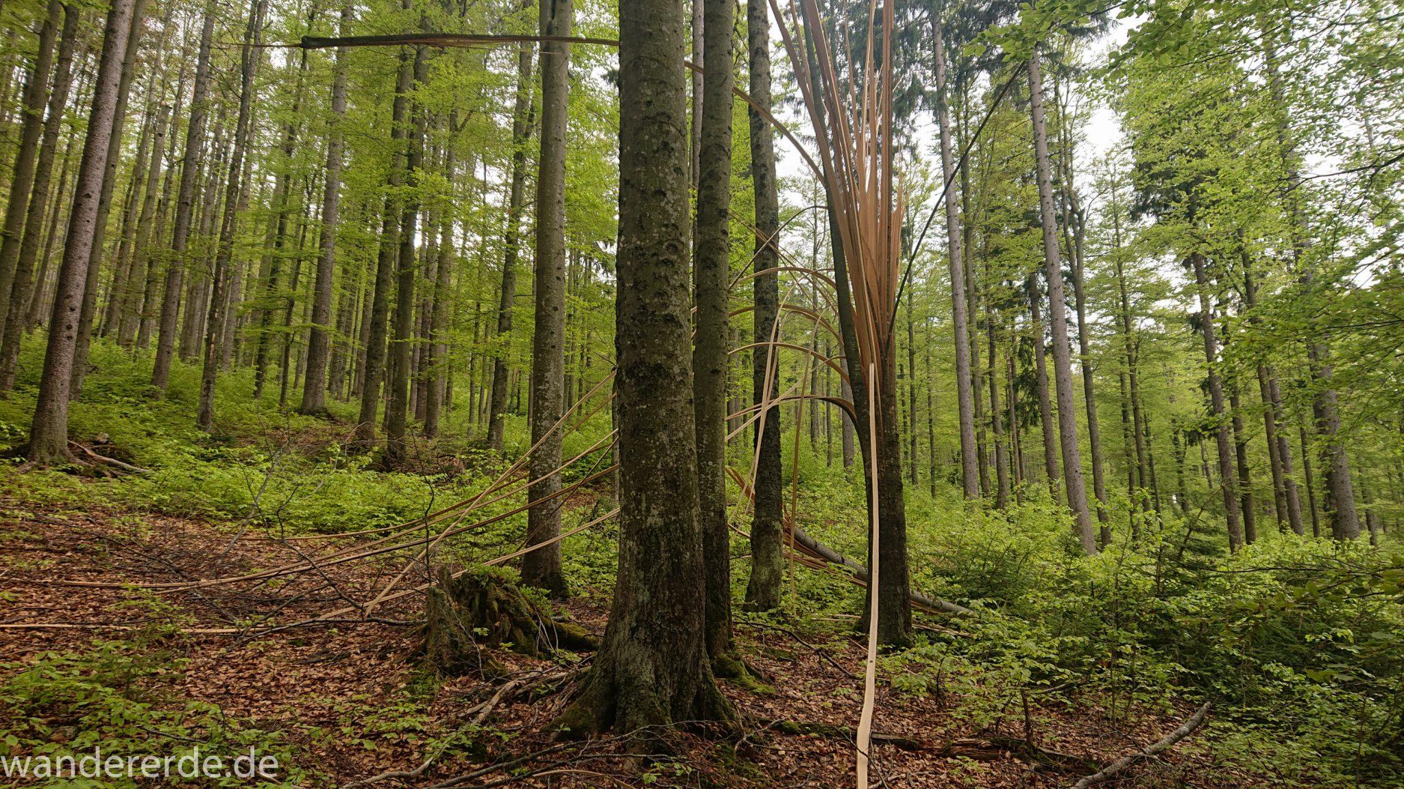 Wanderung Großer Rachel im Nationalpark Bayerischer Wald, Start Parkplatz Oberfrauenau, toller naturbelassener Wanderweg mit kühlendem Schatten, schöner dichter Wald, Kunstwerk auf zersplittertem Baum, Frühjahr im bayerischen Wald