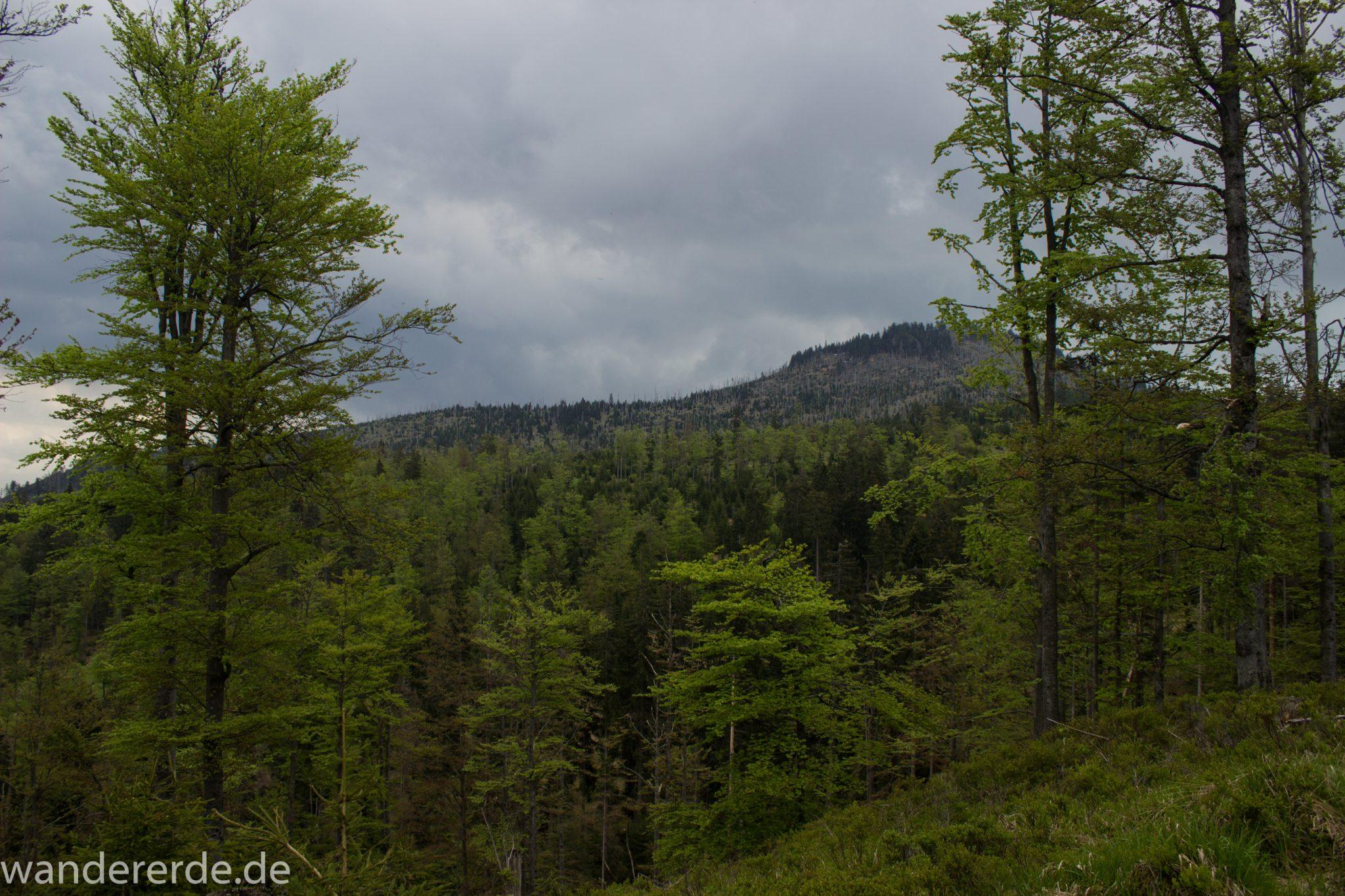 Wanderung Großer Rachel im Nationalpark Bayerischer Wald, Start Parkplatz Oberfrauenau, Aussicht auf riesiges Waldgebiet, schöner dichter Wald