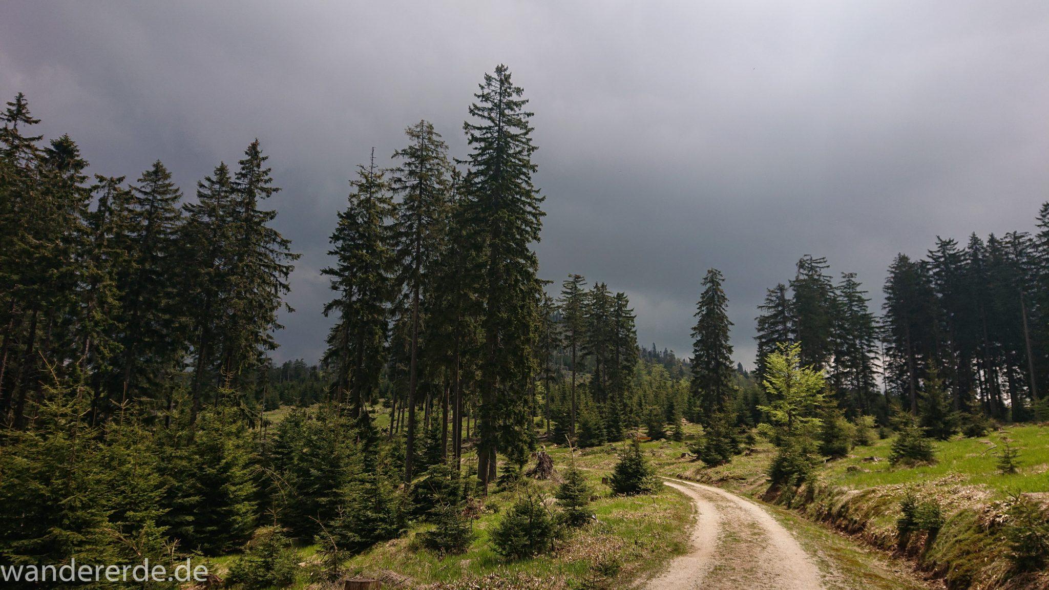 Wanderung Großer Rachel im Nationalpark Bayerischer Wald, Start Parkplatz Oberfrauenau, abwechslungsreicher naturbelassener Wanderweg auf den Berg Großer Rachel, schöner dichter Wald im Nationalpark Bayerischer Wald