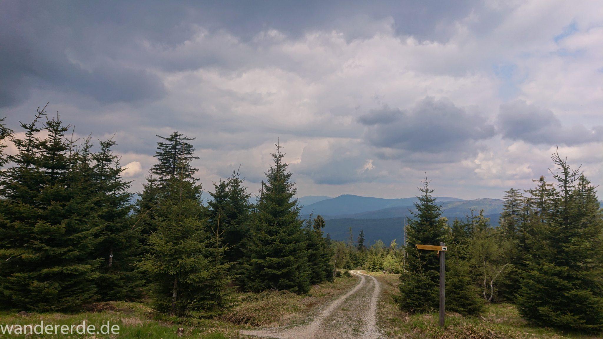 Wanderung Großer Rachel im Nationalpark Bayerischer Wald, Start Parkplatz Oberfrauenau, abwechslungsreicher naturbelassener Wanderweg auf den Berg Großer Rachel, schöner dichter Wald im Nationalpark Bayerischer Wald, Wegmarkierung grünes Dreieck, weite Aussicht auf großes Waldgebiet und Berge in der Ferne