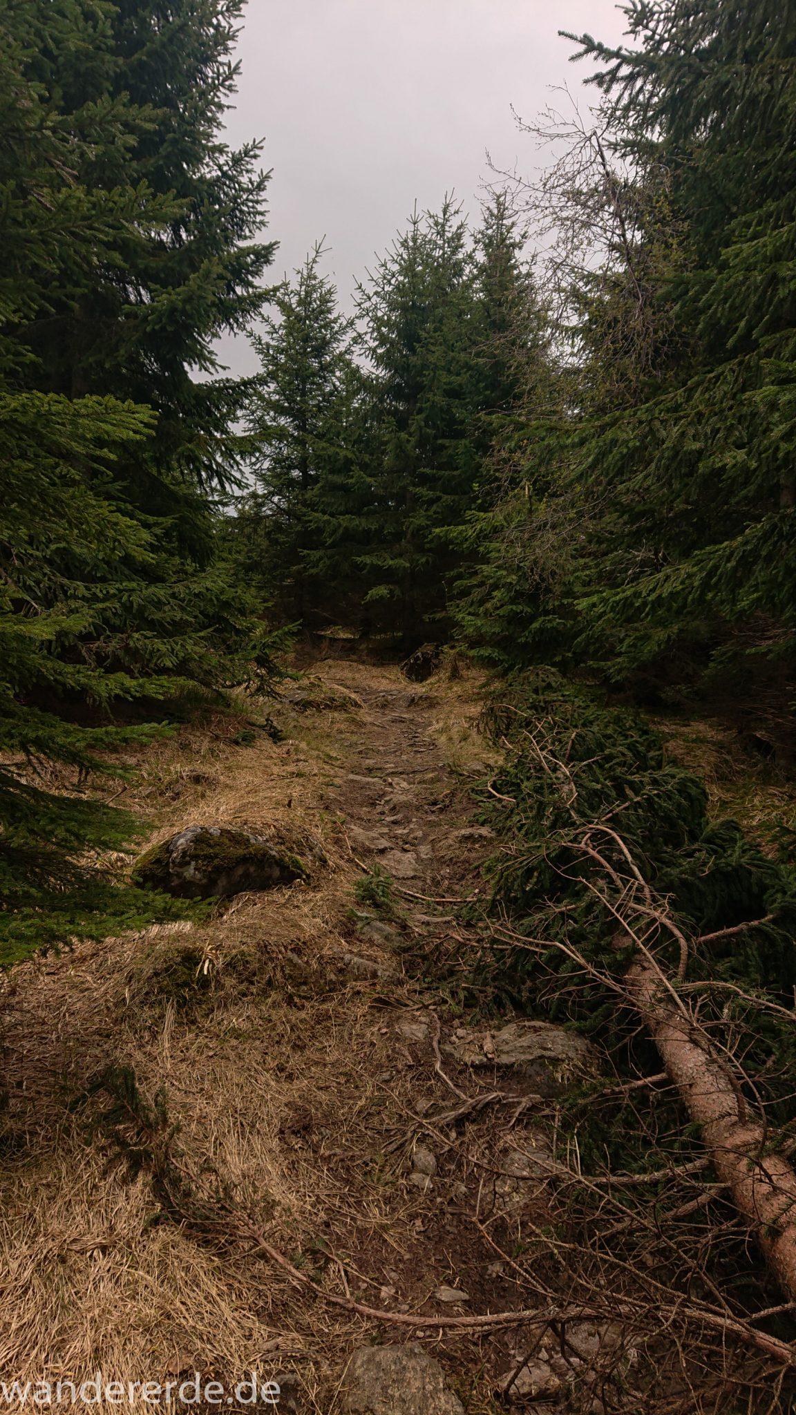 Wanderung Großer Rachel im Nationalpark Bayerischer Wald, Start Parkplatz Oberfrauenau, toller naturbelassener Wanderweg mit kühlendem Schatten, umgefallene Bäume werden liegen gelassen, schöner dichter Wald