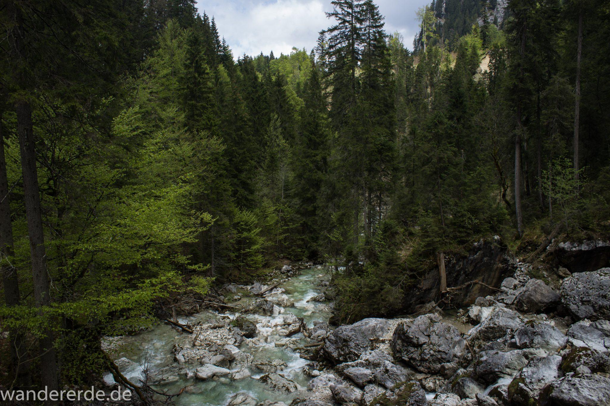Wanderung zur Kenzenhütte in den Ammergauer Alpen, Gebirgsbach führt durch idyllischen Wald, Gehölz und Steine, Laubbaum, Nadelbaum, klares Wasser bahnt sich seinen Weg ins Tal