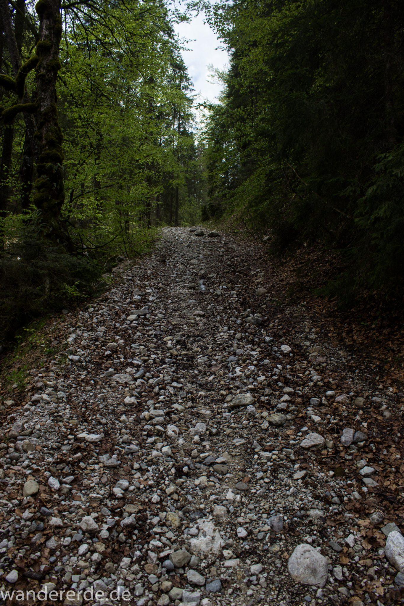 Wanderung zur Kenzenhütte in den Ammergauer Alpen, schmaler Wanderpfad mit kleinen Kieselsteinen, menschenleerer Weg, Frühjahr in den bayerischen Alpen, dichter grüner Wald