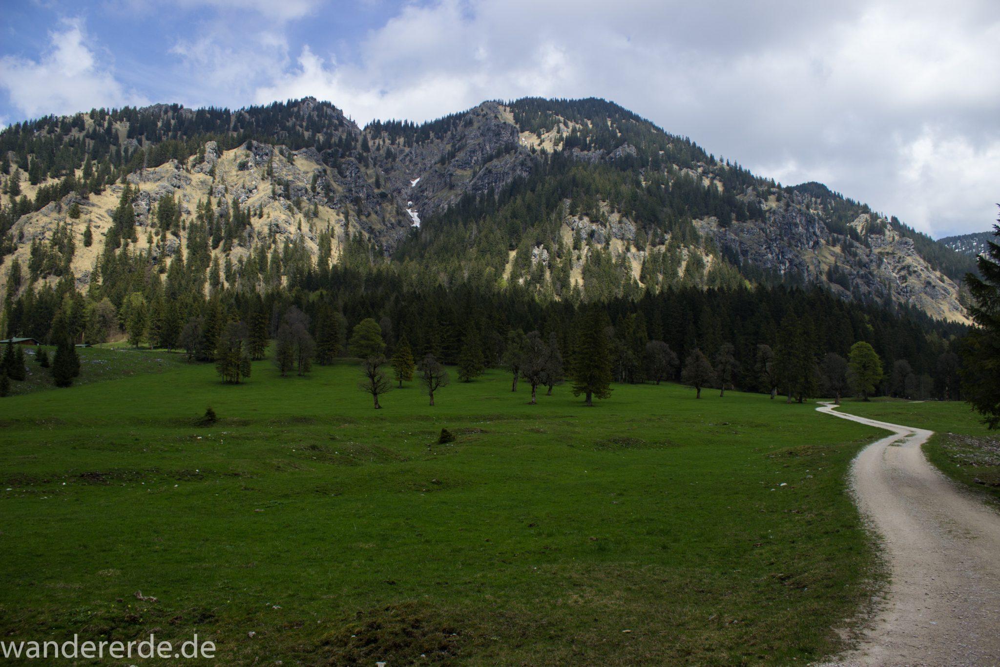 Wanderung zur Kenzenhütte in den Ammergauer Alpen, breiterer Kieselweg führt Richtung Berge, Frühjahr in den Alpen, dichter grüner Wald und saftige Wiesen