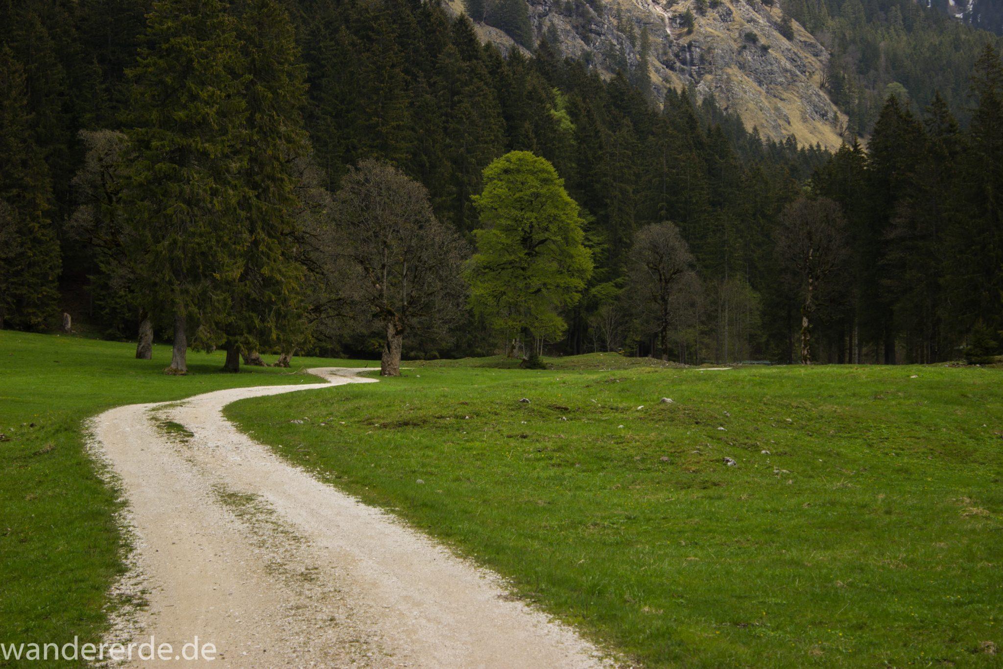 Wanderung zur Kenzenhütte in den Ammergauer Alpen, breiterer Kieselweg führt Richtung Berge, Frühjahr in den Ammergauer Alpen in Bayern, dichter grüner Wald und saftige Wiesen