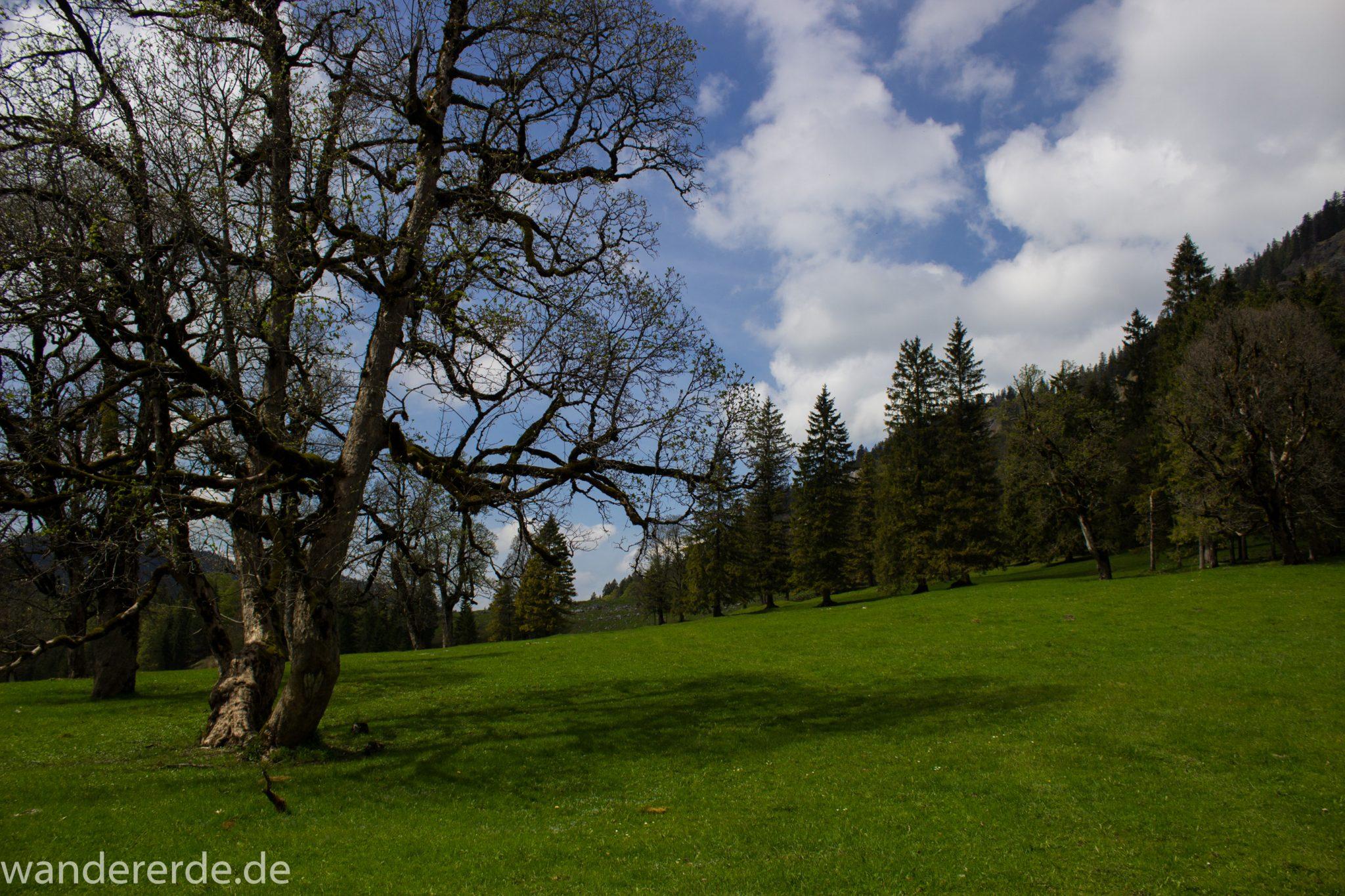 Wanderung zur Kenzenhütte in den Ammergauer Alpen, in den Bergen im Frühjahr, Ammergauer Alpen in Bayern, dichter grüner Wald am Berghang und saftige Wiesen