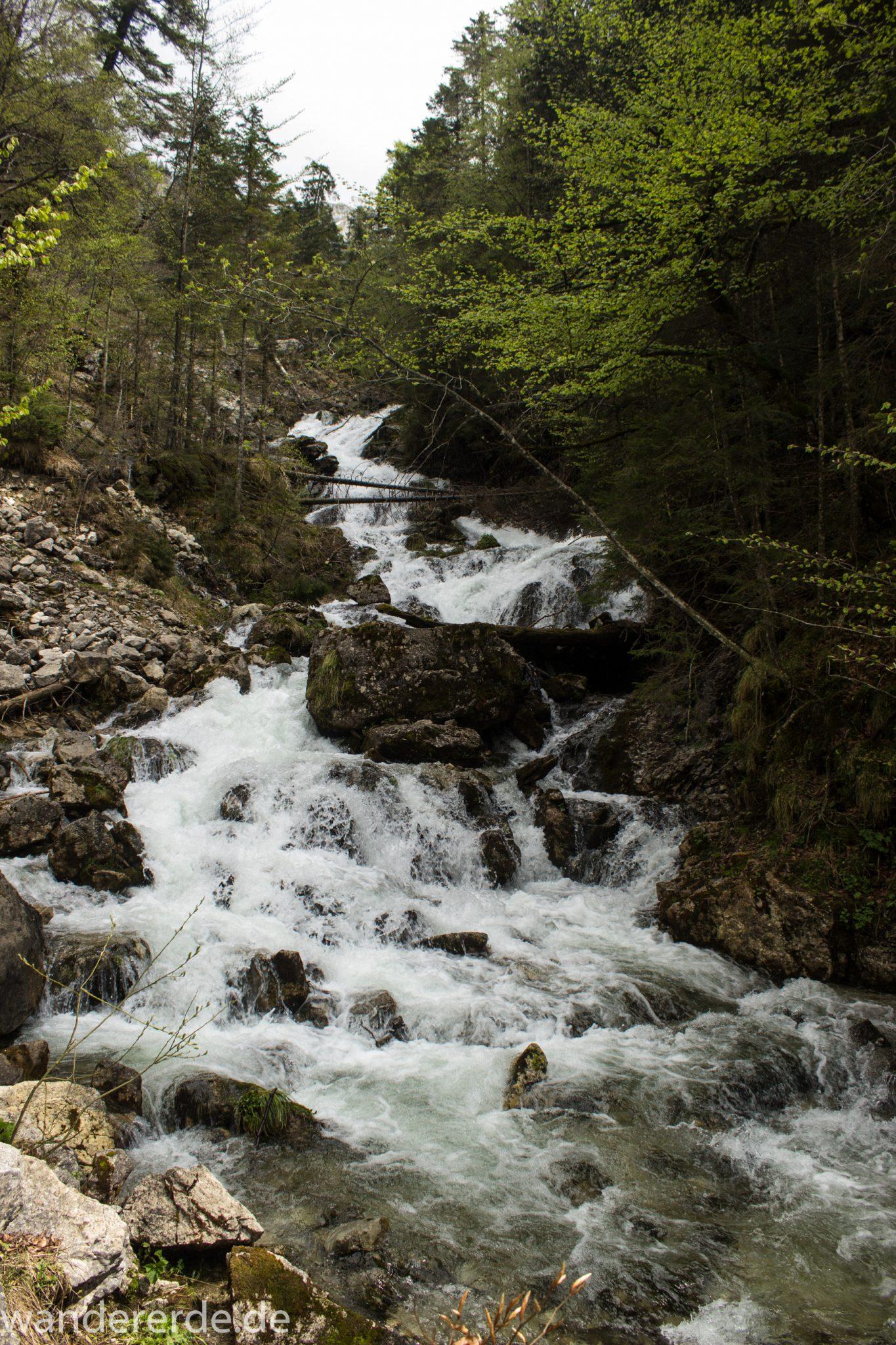 Wanderung zur Kenzenhütte in den Ammergauer Alpen, kleiner Wasserfall in idyllischem Wald, Gehölz und Steine, Laubbäume, klares Wasser bahnt sich seinen Weg ins Tal