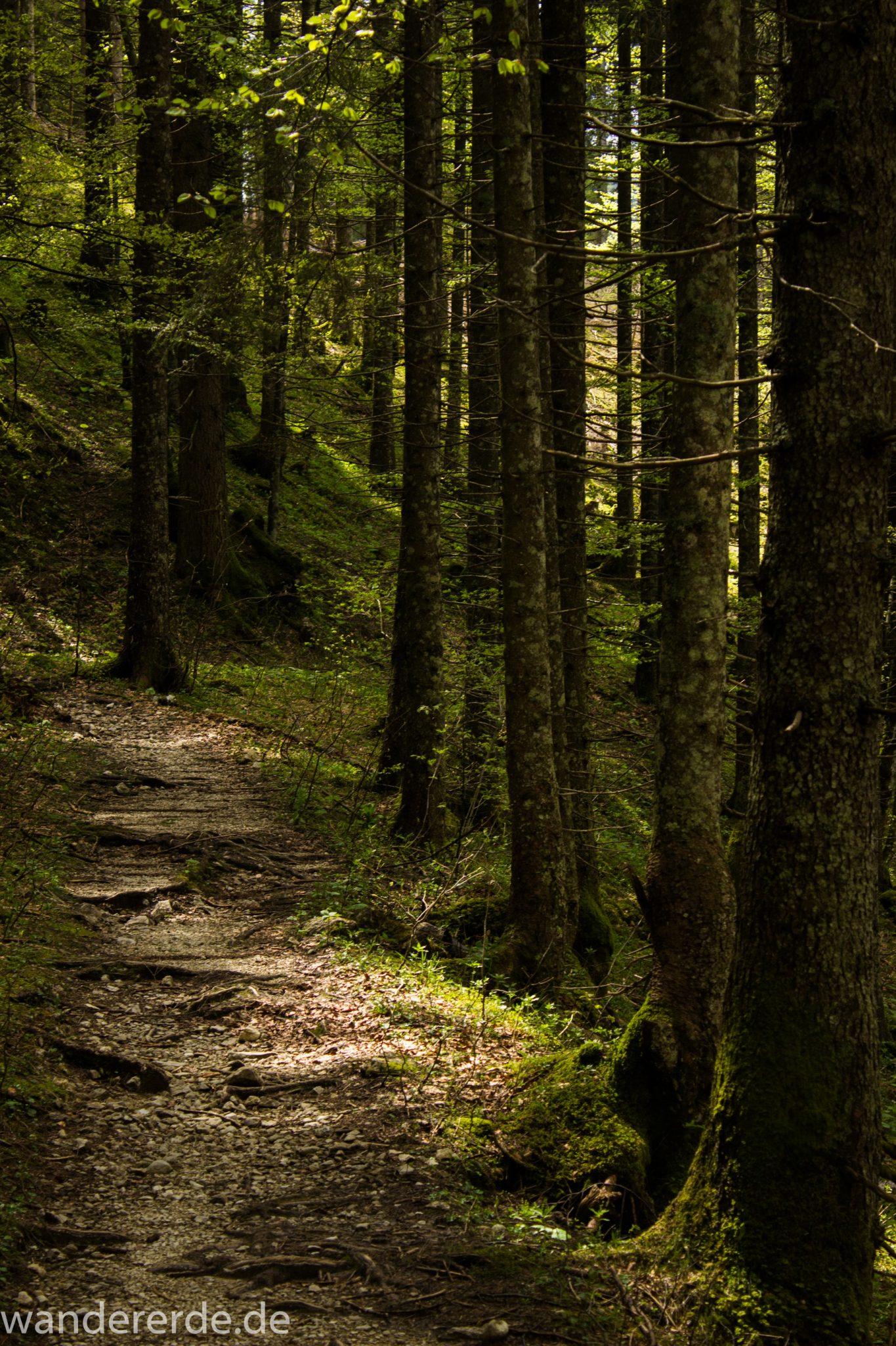 Wanderung zur Kenzenhütte in den Ammergauer Alpen, schmaler Wanderweg im schönen, dichten und grünen Wald