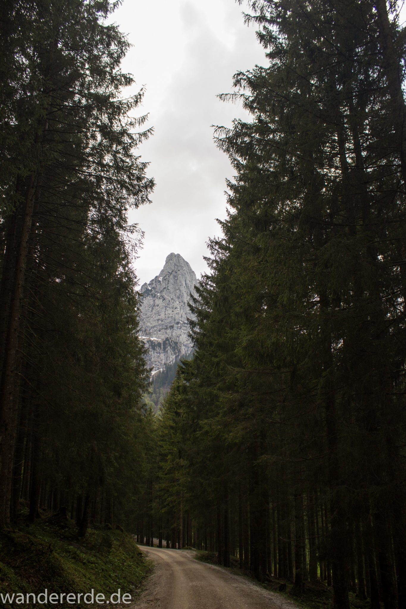 Wanderung zur Kenzenhütte in den Ammergauer Alpen, breiterer Kieselweg führt Richtung Berge, Berge in Wolken gehüllt, Frühjahr in den bayerischen Alpen, dichter grüner Wald verschafft tolle Atmosphäre