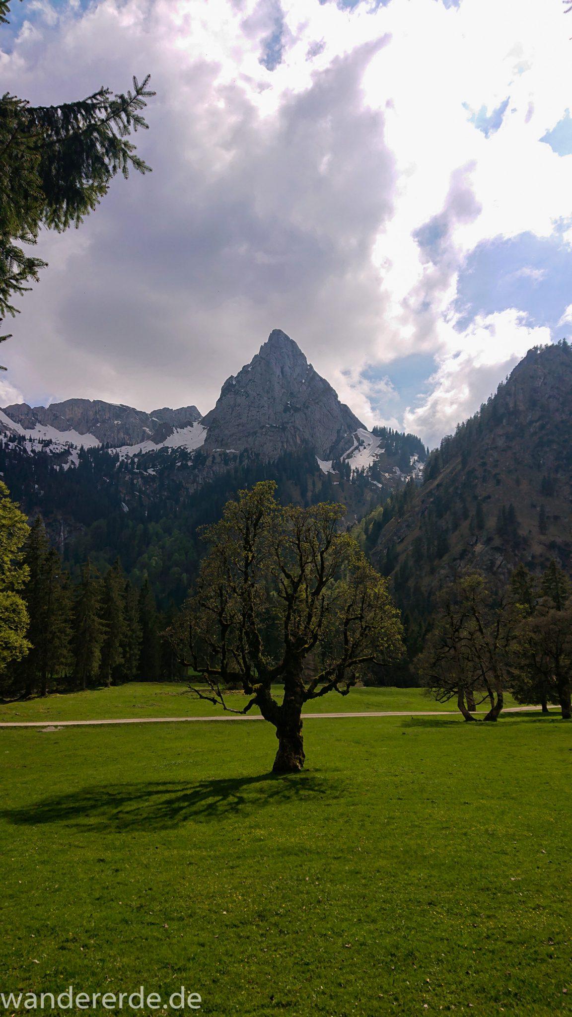 Wanderung zur Kenzenhütte in den Ammergauer Alpen, Aussicht auf die Berge, spitzer Gipfel und schöner Laubbaum prägen dieses Bild, Frühjahr in den bayerischen Alpen, Wanderweg führt entlang dichtem grünen Wald und saftigen Wiesen