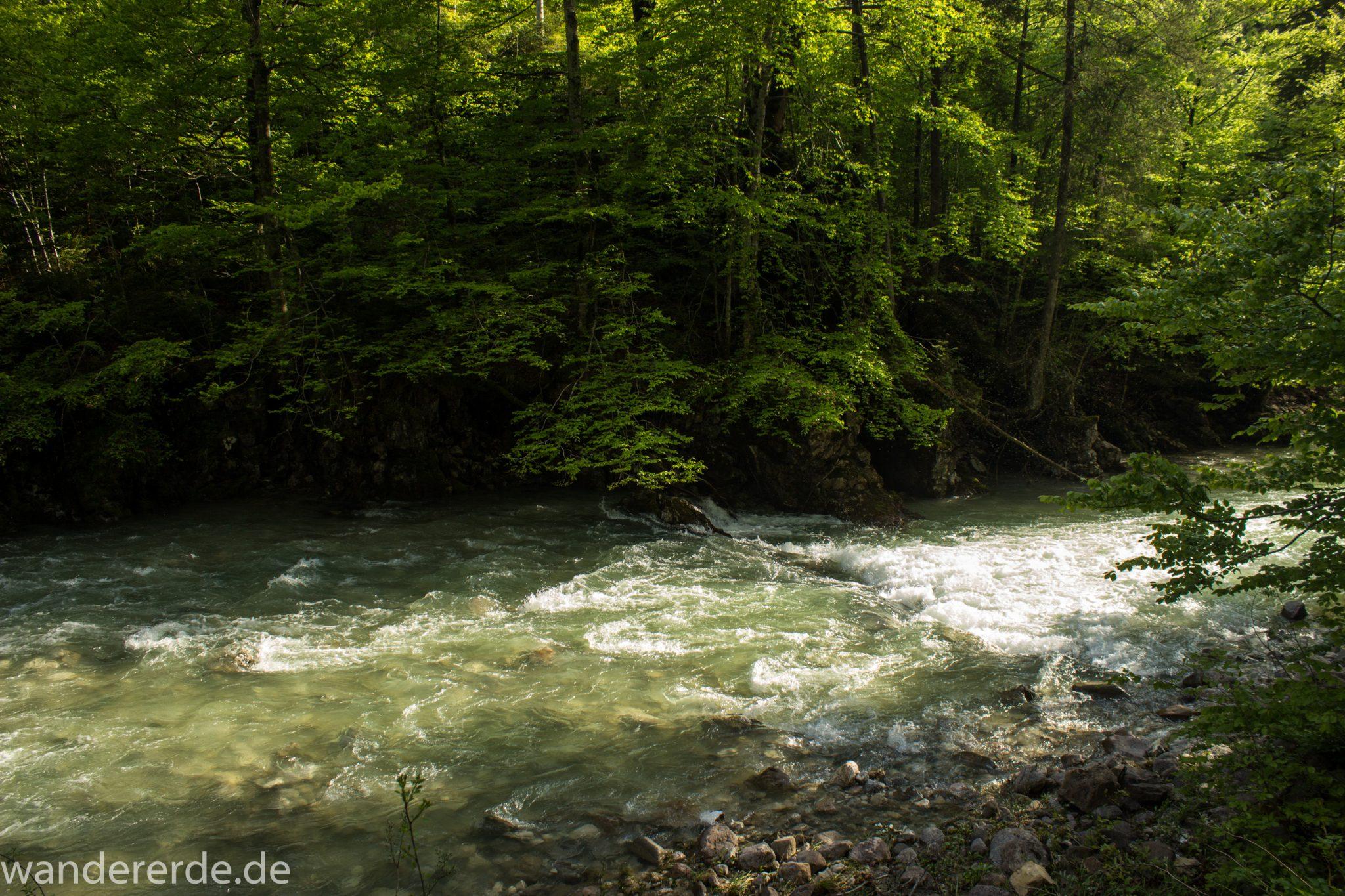 Wanderung zur Kenzenhütte in den Ammergauer Alpen, Frühjahr in den bayerischen Alpen, dichter grüner Wald, schöne Laubbäume, Wanderweg führt entlang schönen, idyllischem Fluss Halblech, nach viel Regen sehr voller Fluss Halblech