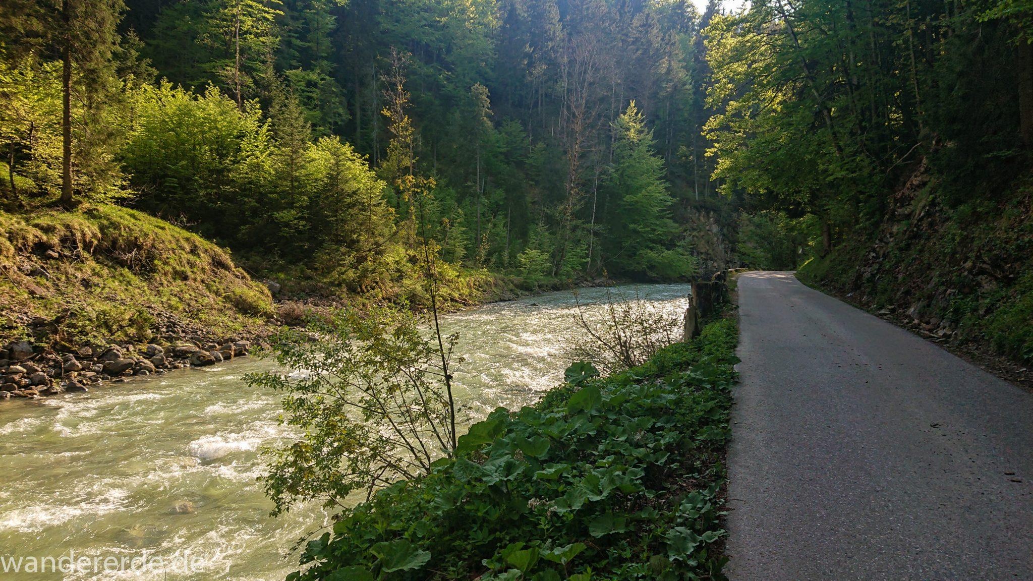 Wanderung zur Kenzenhütte in den Ammergauer Alpen, Frühjahr in den bayerischen Alpen, dichter grüner Wald, schöne Laubbäume, Wanderweg ist leider eine schmale Asphaltstraße, aber die Umgebung entschädigt, Verlauf des Weges entlang schönen, idyllischem Fluss Halblech, nach viel Regen sehr voller Fluss Halblech