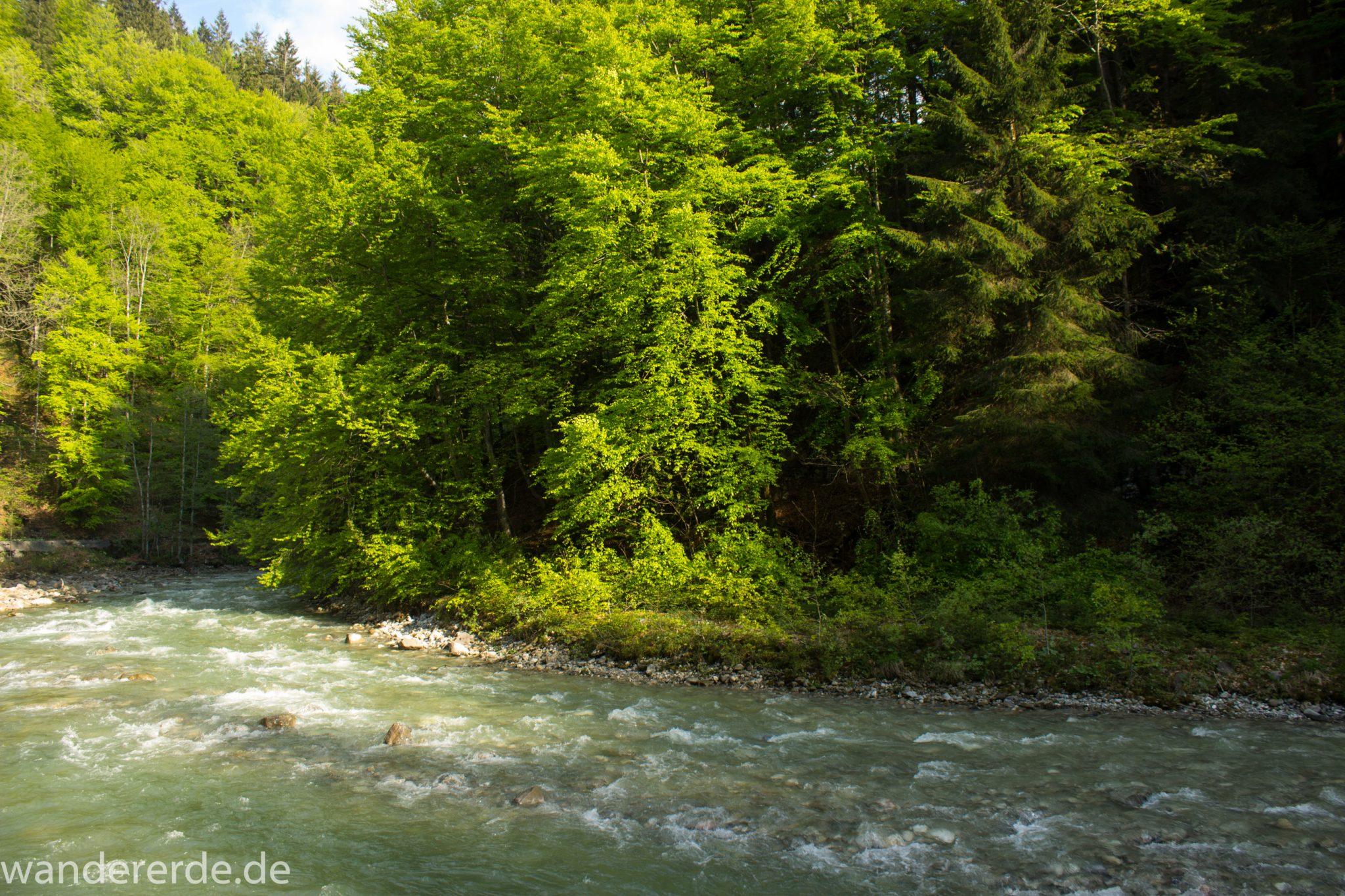Wanderung zur Kenzenhütte in den Ammergauer Alpen, Frühjahr in den bayerischen Alpen, dichter grüner Wald, schöne Laubbäume, Wanderweg führt entlang schönen, idyllischem Fluss Halblech