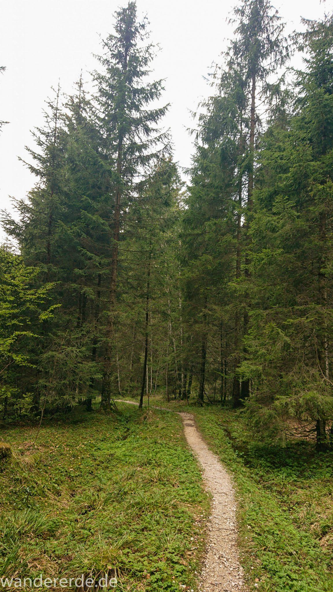 Wanderung zur Kenzenhütte in den Ammergauer Alpen, schmaler Wanderpfad, menschenleerer Weg, Frühjahr in den bayerischen Alpen, dichter grüner Wald und saftige Wiesen