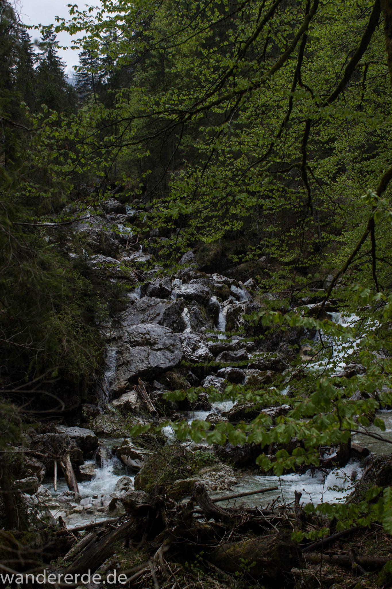 Wanderung zur Kenzenhütte in den Ammergauer Alpen, kleiner Wasserfall in idyllischem Wald, Gehölz und Steine, Laubbaum ragt ins Bild