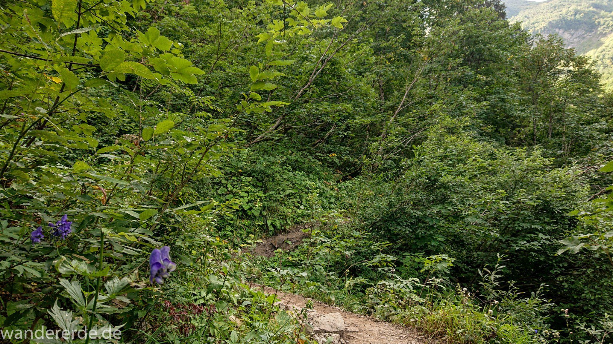 Alpenüberquerung Fernwanderweg E5 Oberstdorf Meran, 1. Etappe von Oberstdorf zur Kemptner Hütte, Wanderweg führt von der Spielmannsau bei Oberstdorf im Allgäu zur Kemptner Hütte  entlang eines schmalen Wanderpfads umgeben von saftig grüner Vegetation, beinahe wie im Dschungel