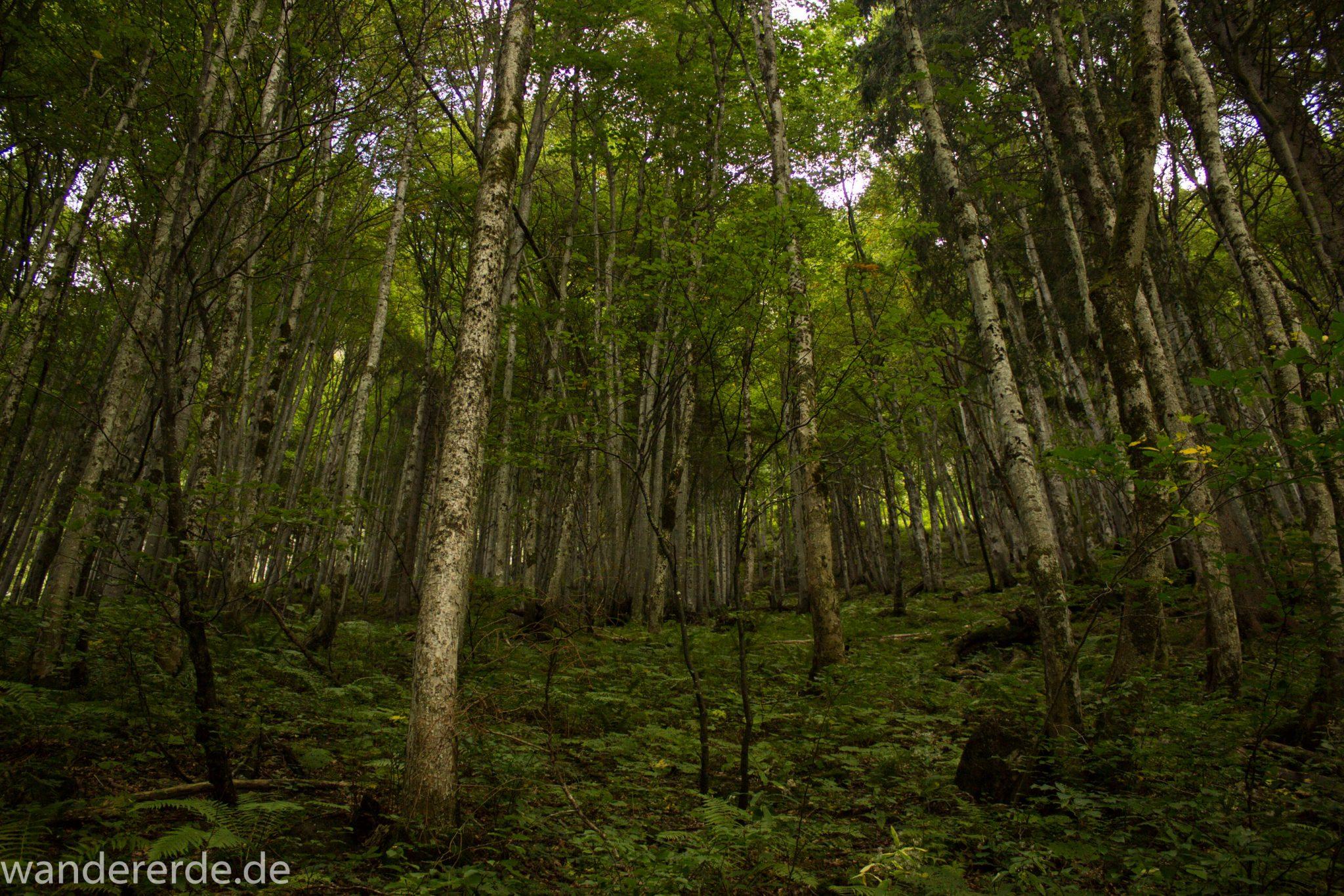 Alpenüberquerung Fernwanderweg E5 Oberstdorf Meran, 1. Etappe von Oberstdorf zur Kemptner Hütte, Wanderweg führt von der Spielmannsau bei Oberstdorf im Allgäu zur Kemptner Hütte  entlang eines schmalen Wanderpfads umgeben von saftig grüner Vegetation, schöner, dichter Wald