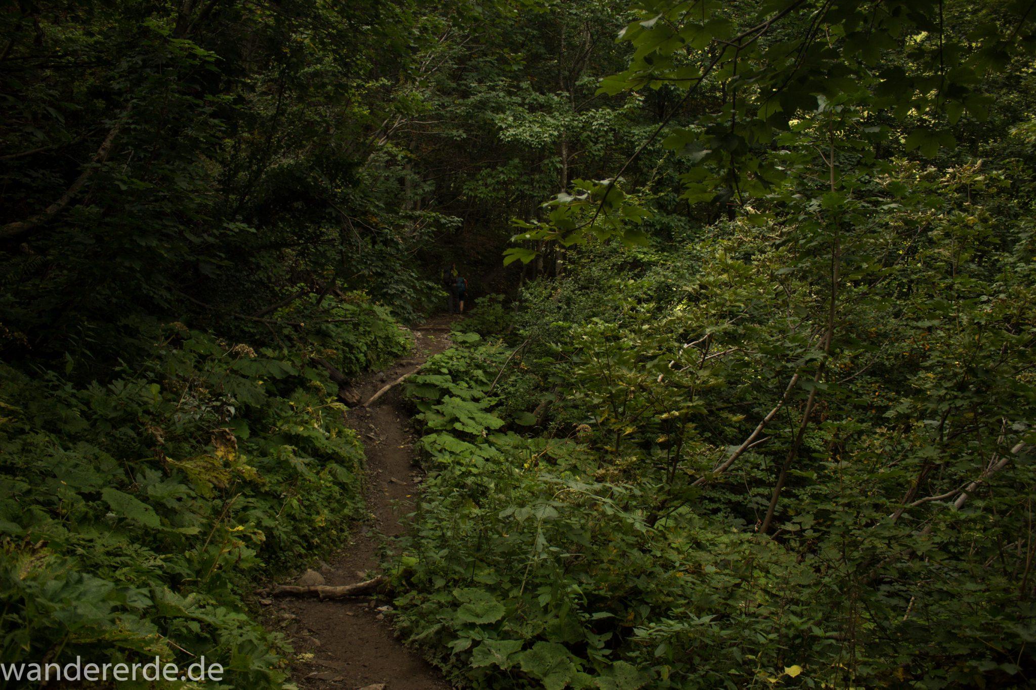 Alpenüberquerung Fernwanderweg E5 Oberstdorf Meran, 1. Etappe von Oberstdorf zur Kemptner Hütte, Wanderweg führt von der Spielmannsau bei Oberstdorf im Allgäu zur Kemptner Hütte  entlang eines schmalen Wanderpfads umgeben von saftig grüner Vegetation, beinahe wie im Dschungel, schöner, dichter Wald