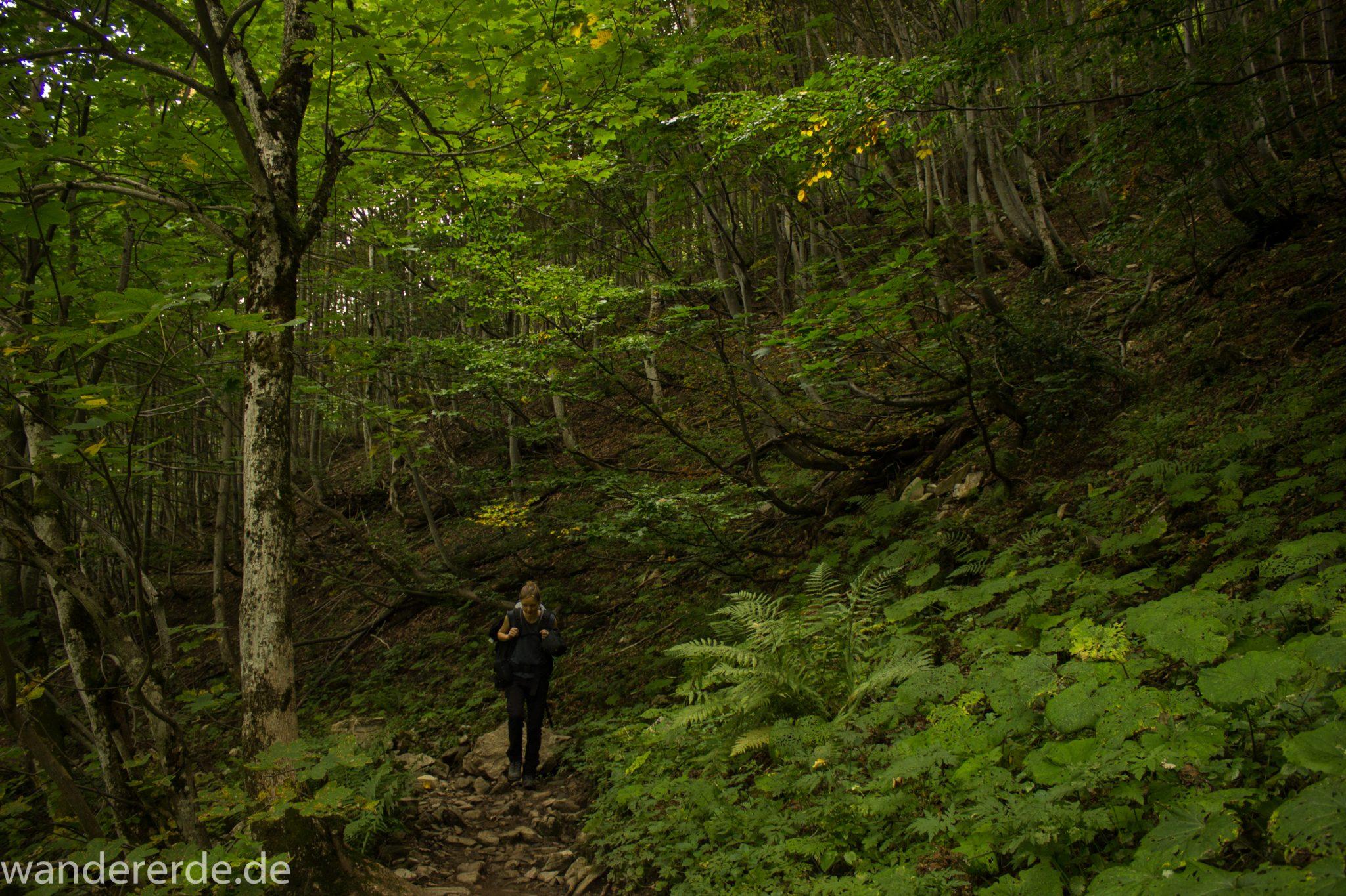 Alpenüberquerung Fernwanderweg E5 Oberstdorf Meran, 1. Etappe von Oberstdorf zur Kemptner Hütte, Wanderweg führt von der Spielmannsau bei Oberstdorf im Allgäu zur Kemptner Hütte  entlang eines schmalen Wanderpfads über Stock und Stein, umgeben von saftig grüner Vegetation, beinahe wie im Dschungel, schöner, dichter Wald, Farne
