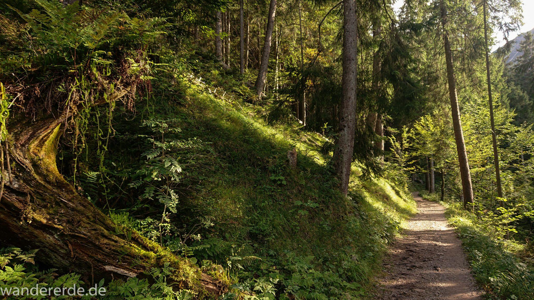 Alpenüberquerung Fernwanderweg E5 Oberstdorf Meran, 1. Etappe von Oberstdorf zur Kemptner Hütte, Wanderweg von Oberstdorf zur Spielmannsau führt durch schönen, dichten Wald bei Oberstdorf im Allgäu, Bayern