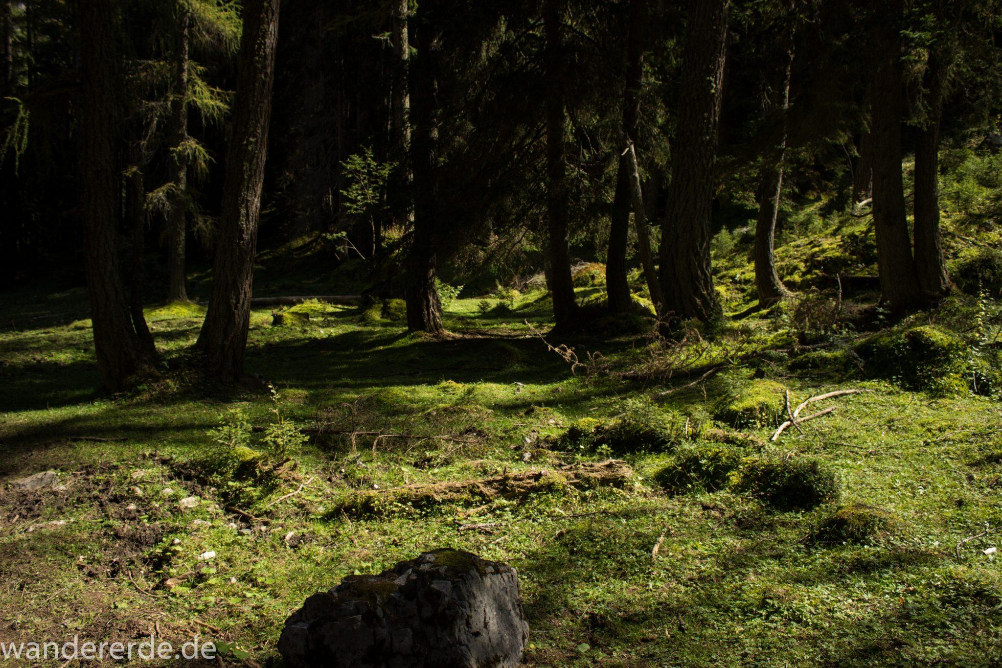Alpenüberquerung Fernwanderweg E5 Oberstdorf Meran, 3. Etappe von Memminger Hütte zur Skihütte Zams, nach Erreichen der Seescharte folgt ein sehr langer Abstieg auf schmalem Wanderpfad Richtung Zams, Abschnitt durch einen schönen, dichten Wald, mit viel Moos bewachsener Waldboden