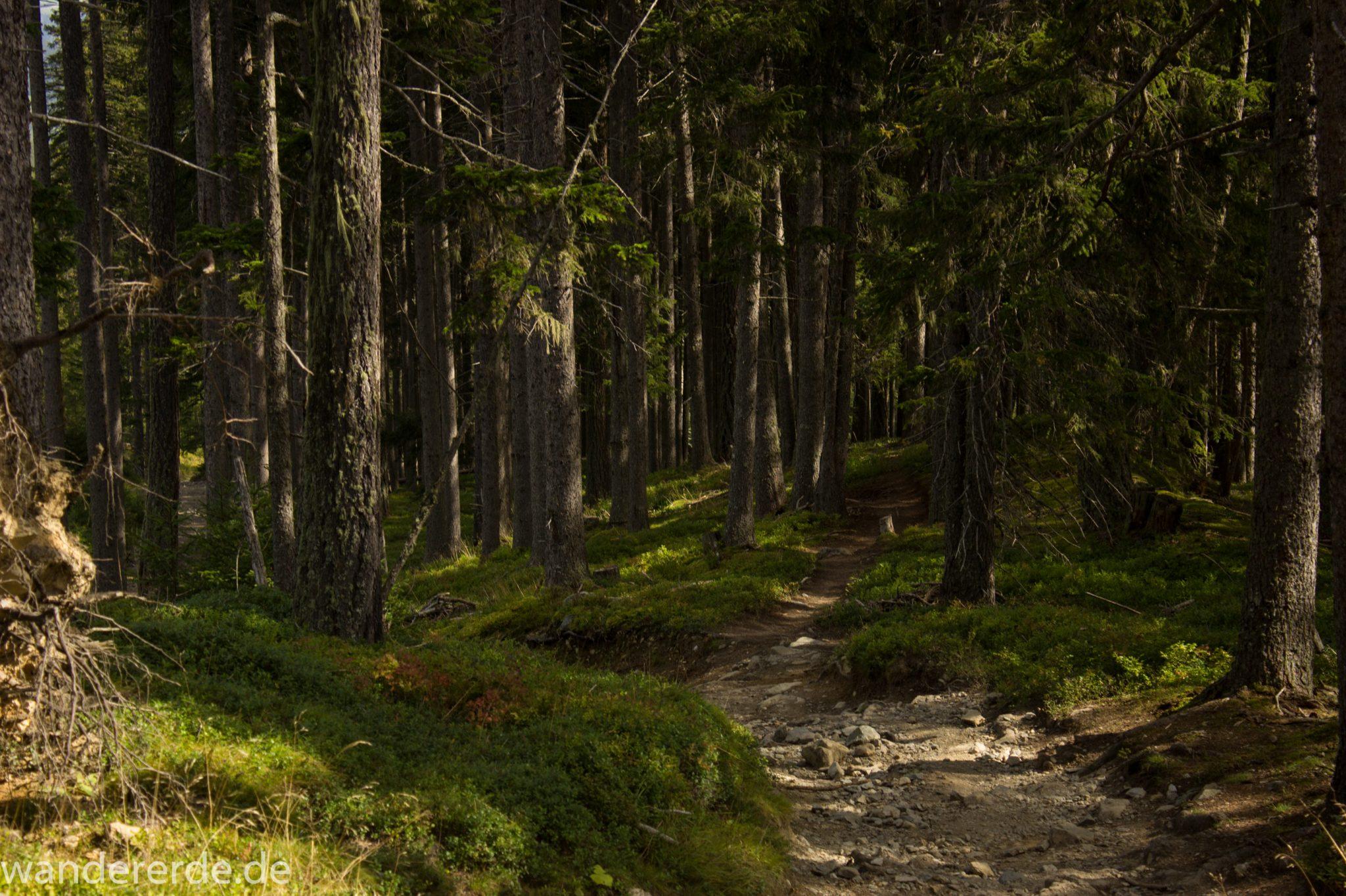Alpenüberquerung Fernwanderweg E5 Oberstdorf Meran, 4. Etappe von Skihütte Zams zur Braunschweiger Hütte, von der Bergstation der Venet Bergbahn über Venetrundweg und dann auf schönem Wanderweg weiter nach Wenns durch schönen, dichten und grünen Wald ist der Wanderweg hier nicht so steil abwärts, grüne Vegetation, herrliches Wanderwetter bei strahlendem Sonnenschein