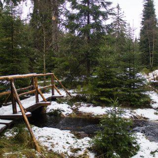 Wanderung zum Oderteich von Torfhaus im Harz über Märchenweg, Rehberger Graben und durch das Odertal, Wanderung im Harz in Niedersachsen, verschneite und idyllische Winterlandschaft entlang des Märchenwegs, Sumpf, umgefallene Bäume im schönen Wald, sehr matschiger Wanderweg, Schnee schmilzt, Bäche sind voll